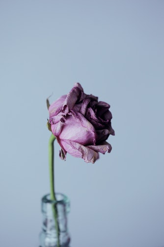 Suicide Resources Dried Flower Picture
