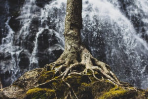 tree roots and waterfall